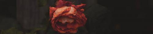 sterben, Tot, Synonyme, Metaphern, getrocknete Rose